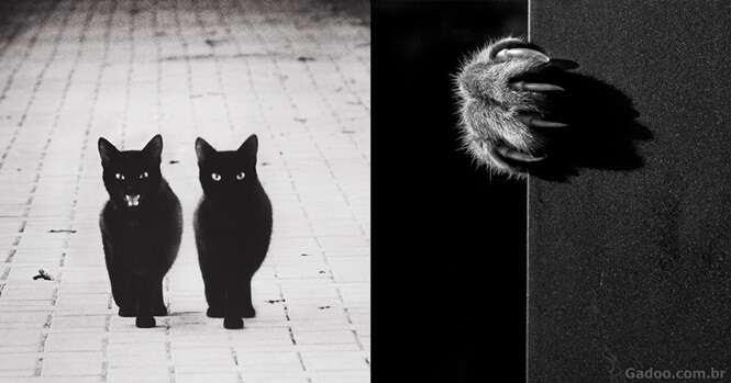 A misteriosa vida dos gatos capturada em preto e branco