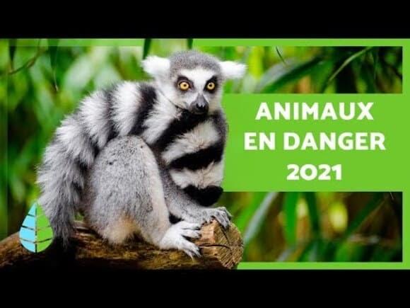 Le constat des animaux en voie de disparition, les animaux rares