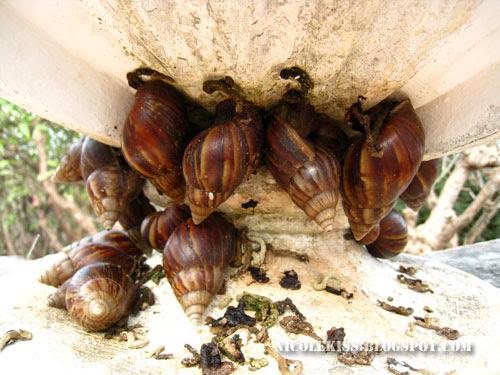 a lot of snails