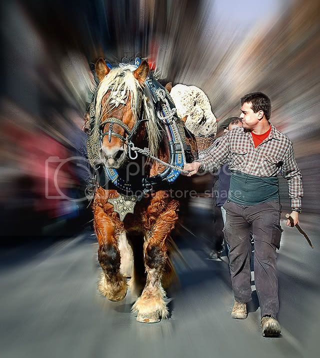 Strong Horse at Tres Tombs Parade, Sant Andreu, Barcelona, Spain [enlarge]