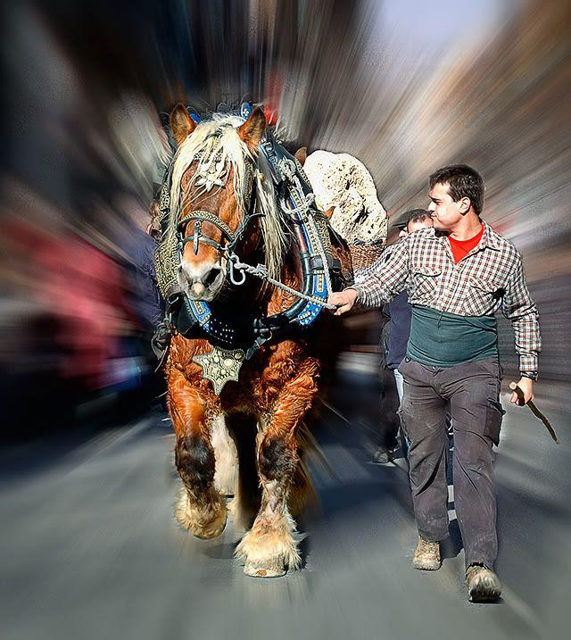 Strong Horse at Tres Tombs Parade, Sant Andreu, Barcelona, Spain [enlarge]
