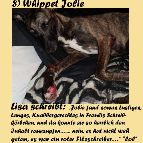 8-Whippet-Jolie