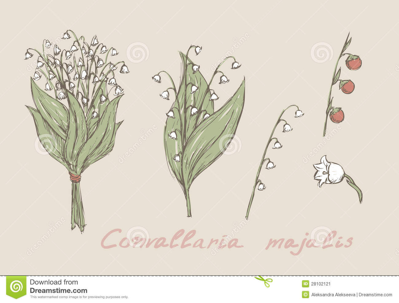 Lily Of The Valley Flower Drawing At Getdrawingscom Free For