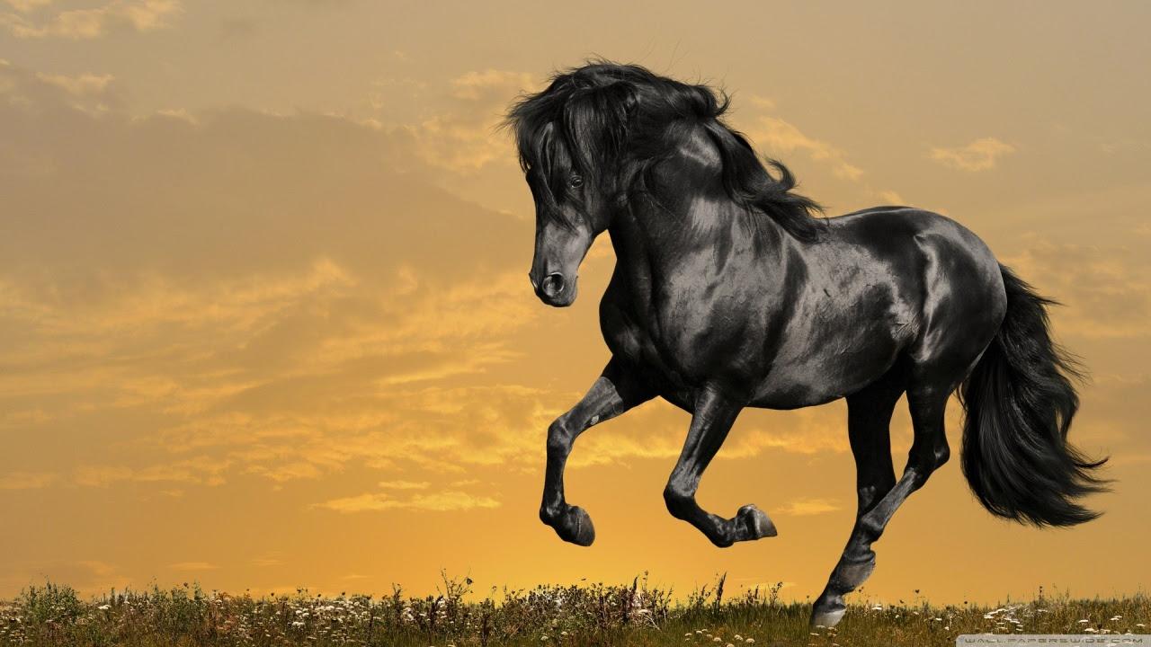 Running Horse Wallpaper Hd Free Wallpapers