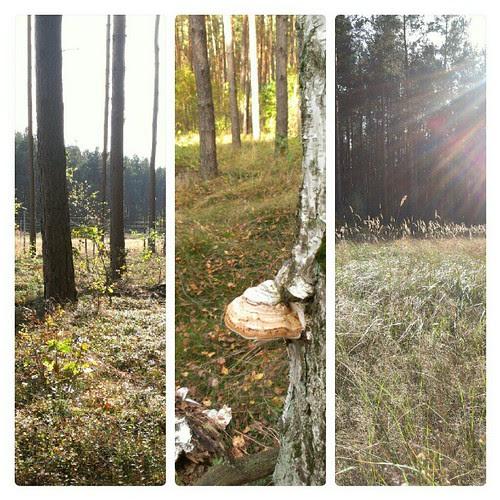Day 21: calm: a morning walk through the woods #fmsphotoaday #fmsphotoadayoctober #FMSphotoaday #wood #morning #sun #instamood #instadaily #instagood #calm #silent #silence