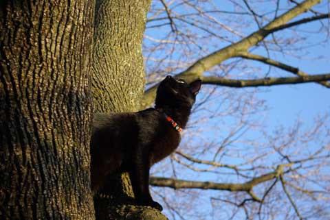 Dis panther iz huntin squirls.