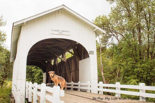 Harris Covered Bridge-4519