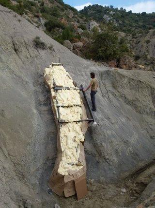 Extraen entero un cuello de dinosaurio de cinco metros en un pueblo de Lleida