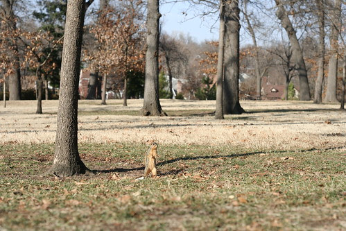 Squirrel at Woodward Park