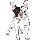 Le Bouledogue Français Et Lart Best Bulldog Blog