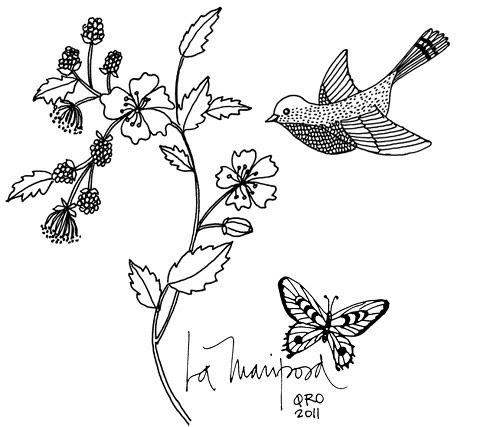 Mariposa drawing