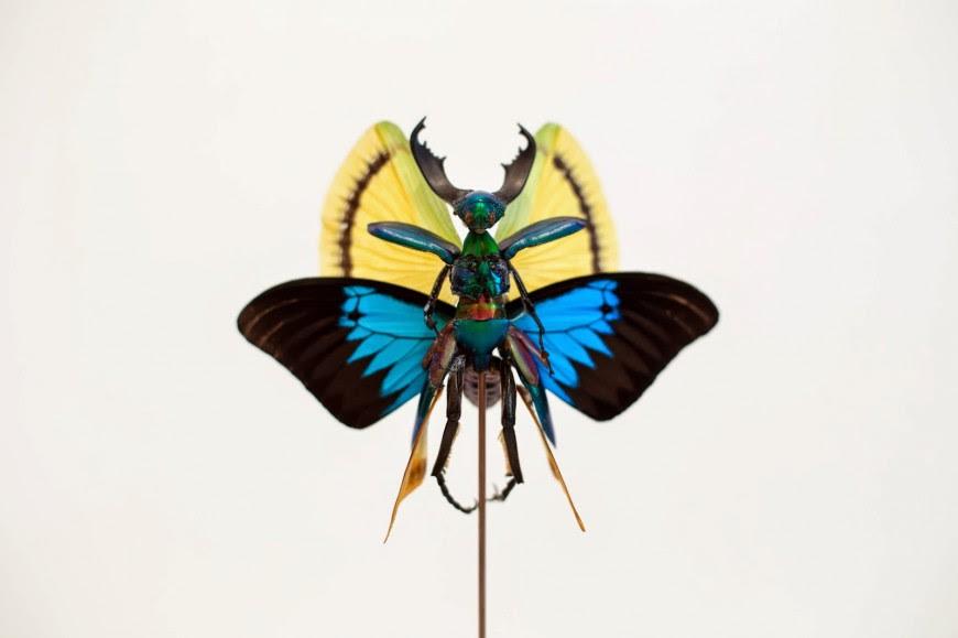 fee insecte graine morceau assemblage 02 870x579 Les fées de Cedric Laquieze