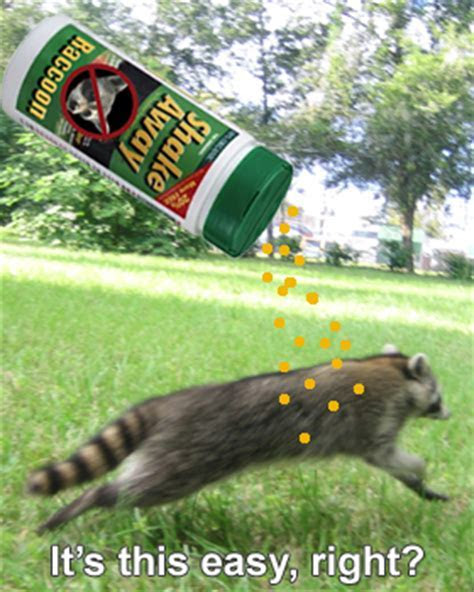 Skunk Repellent.Image Of A Skunk. Hell Hath No Fury Than A Skunk Digging For Foodin Your Yard Or