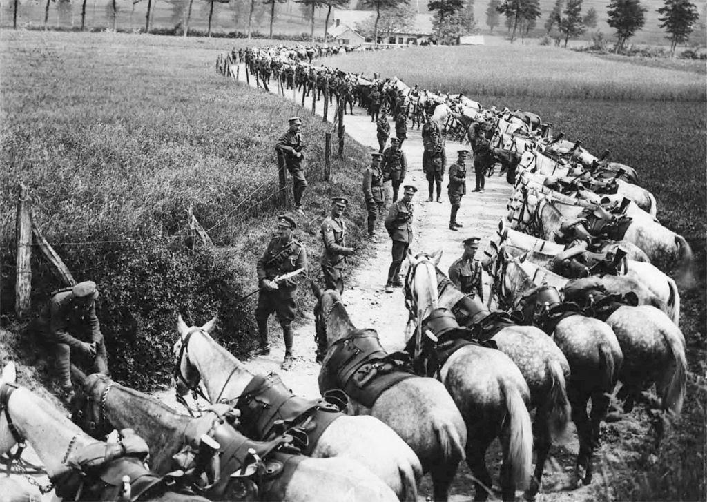 Os animais também lutaram na Primeira Guerra Mundial 07