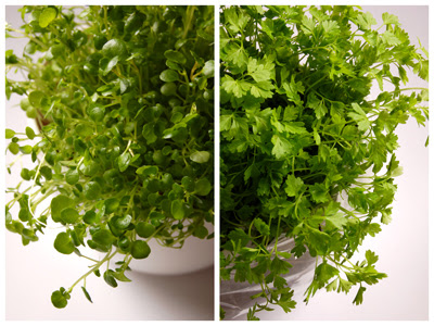 micro_herbs.jpg