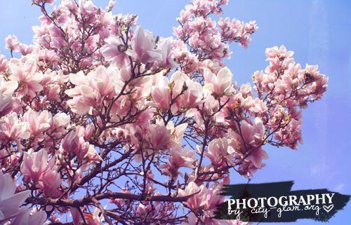 http://i402.photobucket.com/albums/pp103/Sushiina/dailymagnolien1.jpg