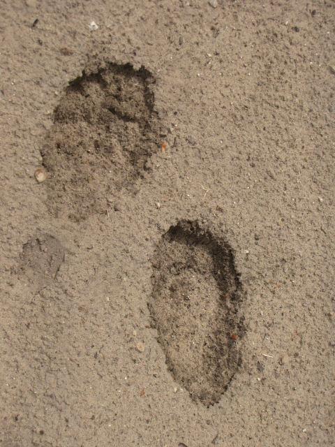 black bear tracks