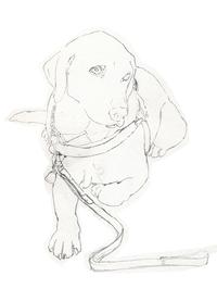 動物イラスト鉛筆画似顔絵イラスト犬イラストのことなら犬の描き