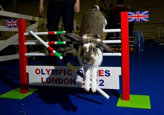 Ολυμπιακοί αγώνες για κουνέλια (15)