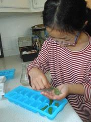 Olivia Making Mint Ice Cubes