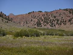 wet grasslands