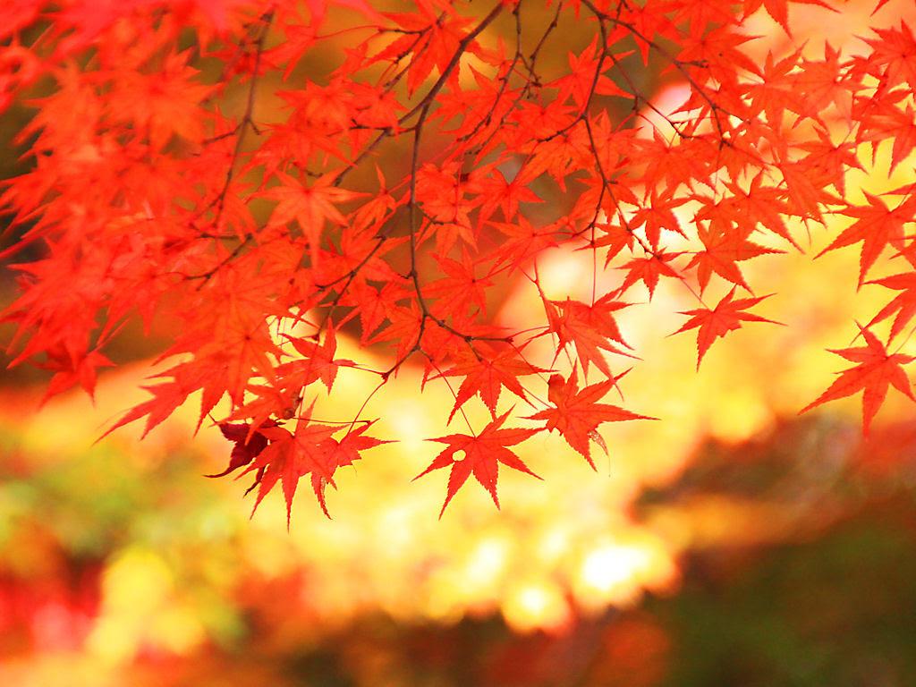 壁紙 紅葉 ぶらり兵庫 ぶらり神戸 神戸の観光情報とイベント