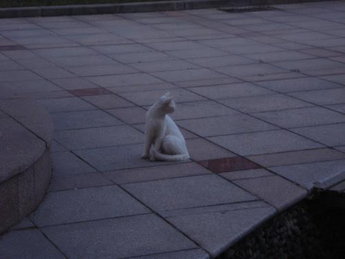 Cats in Shenyang, China _ 0167
