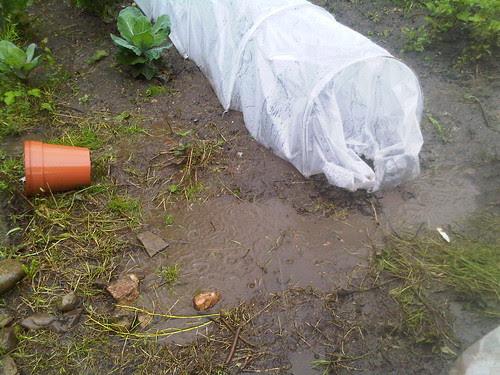 mud on allotment Jul 12 3