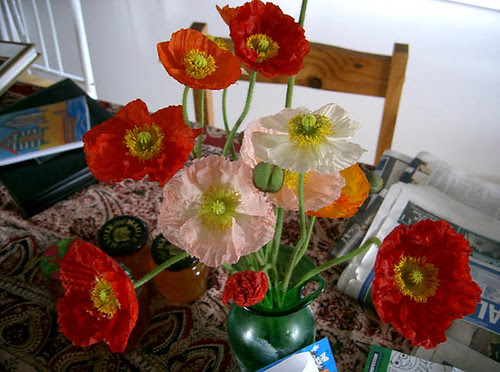 poppies_out