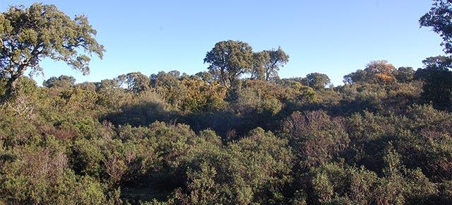 foreste-sardegna