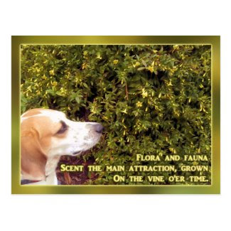 Honeysuckle Hound Dog Postcards