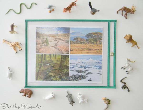 Animal Camouflage free printable