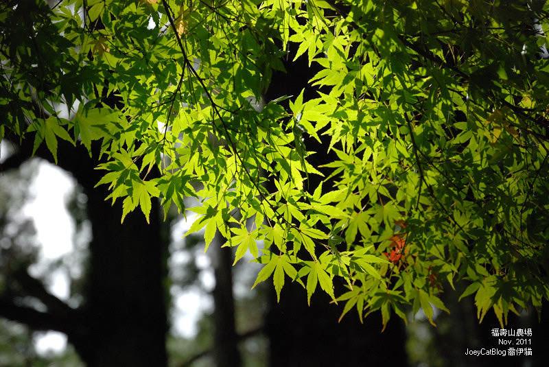 2011_1106福壽山農場DSC_3337