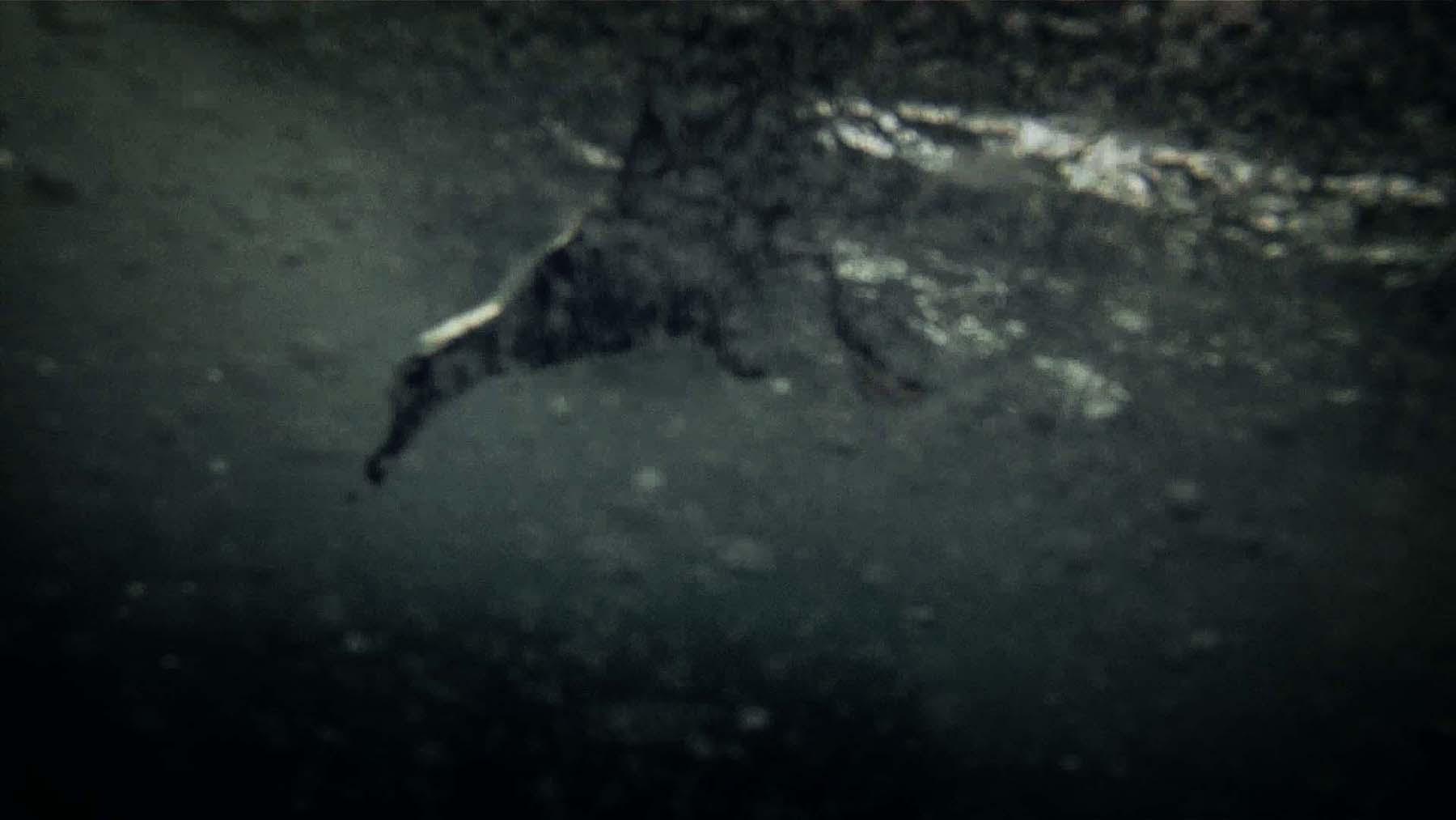 http://www.arretetoncinema.org/leviathan/stills/Oiseau_sous_marin.jpg