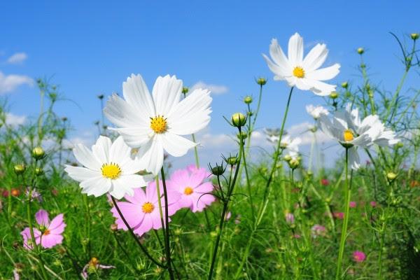 Bonitas Flores Silvestres Blancas Y Rosas 21914