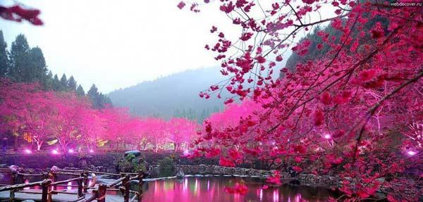 Lake Sacura: Η εκπληκτική λίμνη με τις κερασιές!
