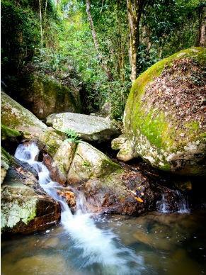 Parque  Estadual Pedra Branca  (Foto: Divulgação / Luiza Reis)