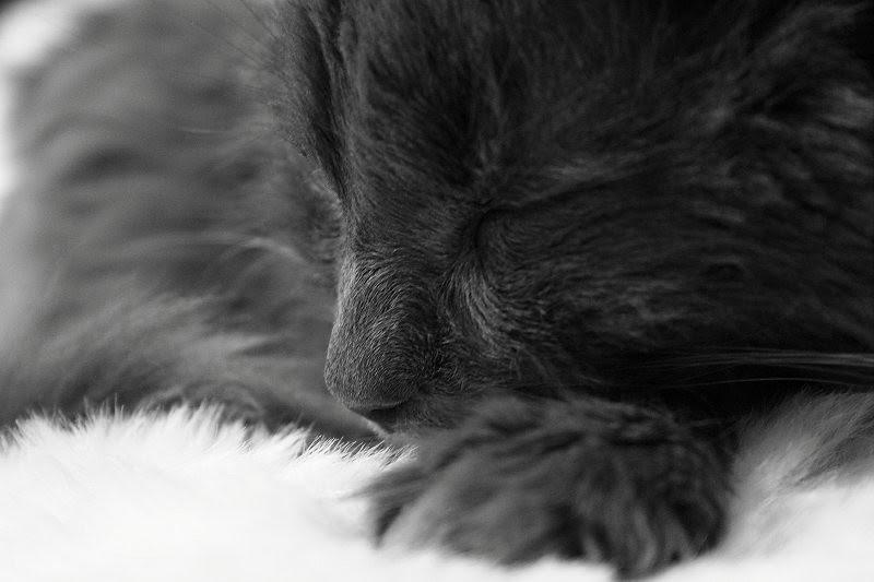 Posky asleep