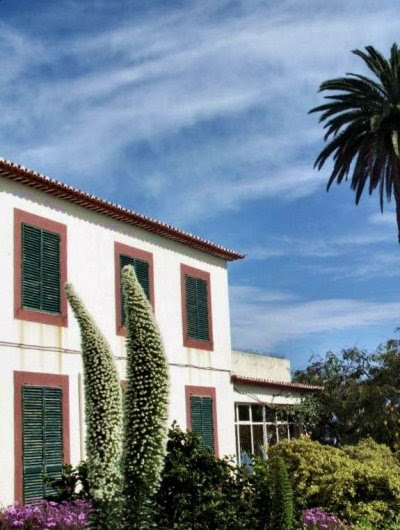 20090424-rq-Quinta da Boa Vista-1 Echium simplex