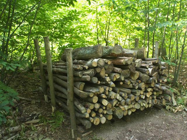 DSC_6954 log stack
