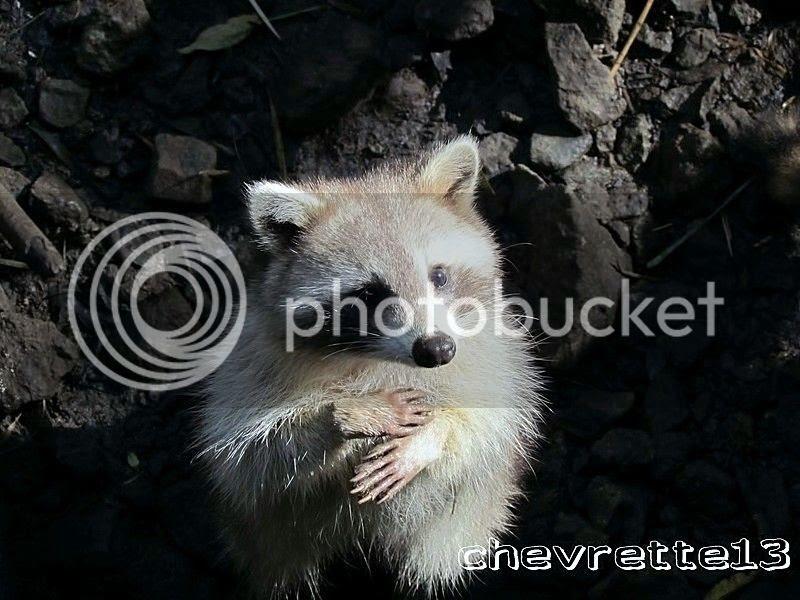 http://i1252.photobucket.com/albums/hh578/chevrette13/Guadeloupe/IMG_8175Copier_zps2d529ca6.jpg