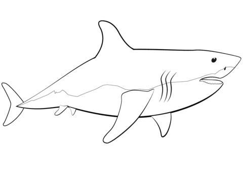 Shark Week - The Mommies Reviews