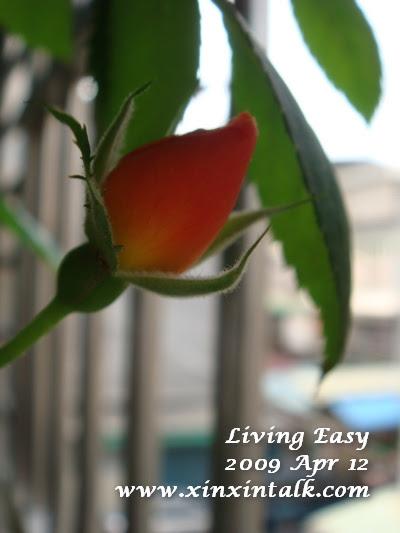 Living Easy