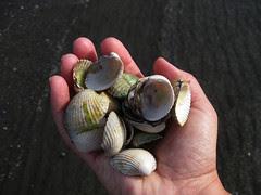 sea shells :: skjell