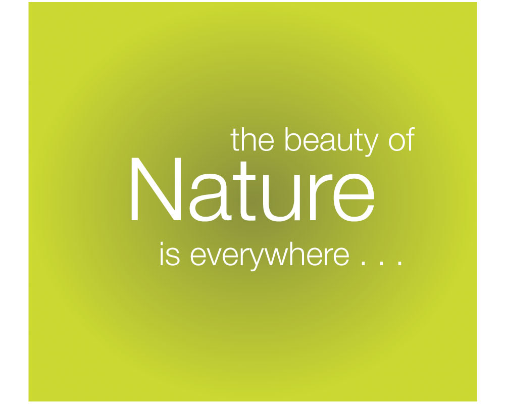 The Beauty Of Nature Is Everywhere Quotespicturescom