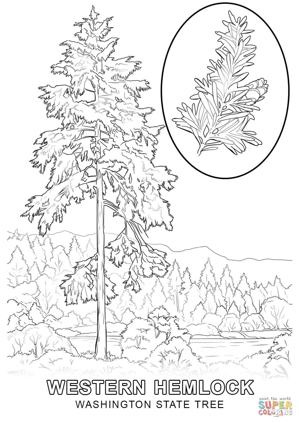 washington state tree coloring page