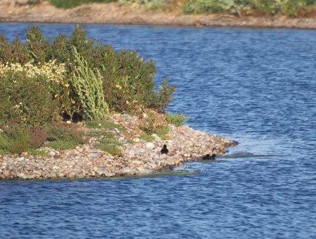 DSC_4295 Ducklings