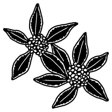 ジンチョウゲ沈丁花春の花無料白黒イラスト素材