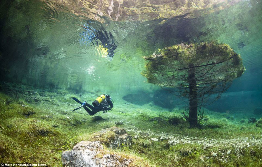 cool-underwater-tree-forest-lake
