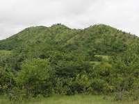 Galera de Baúl en los llanos centrales. Foto tomada en el Hato Piñero (estado Cojedes)